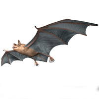 greater mouse-eared bat 3ds