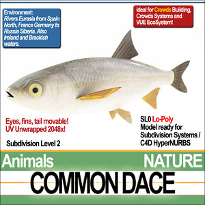 common dace 3d model