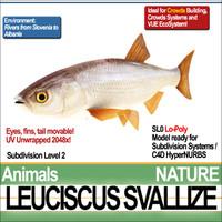 3ds leuciscus svallize
