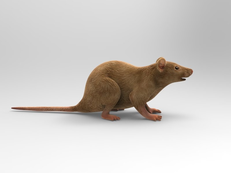 maya mouse animations quads