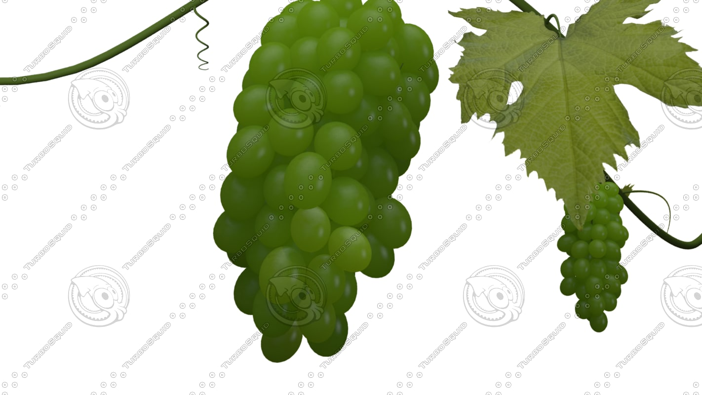 model growing animation grapes for Grapes Animated  155sfw