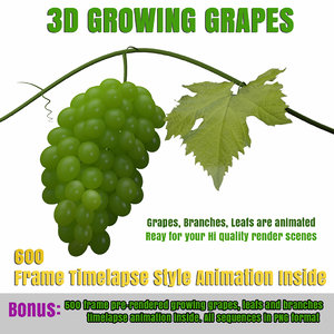 3d model growing animation grapes