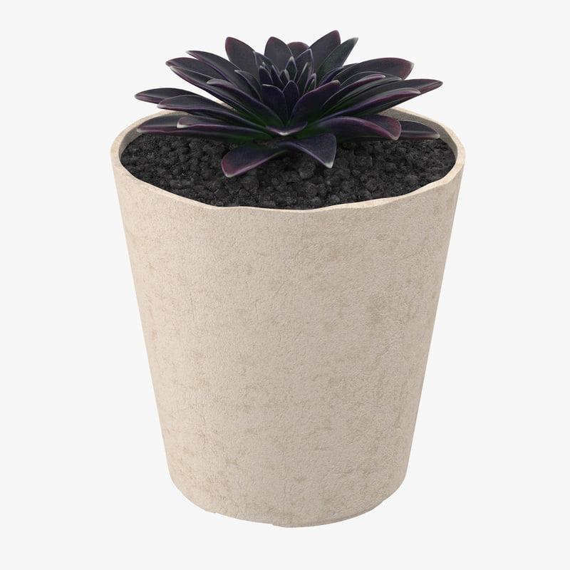 succulent 16 3d max