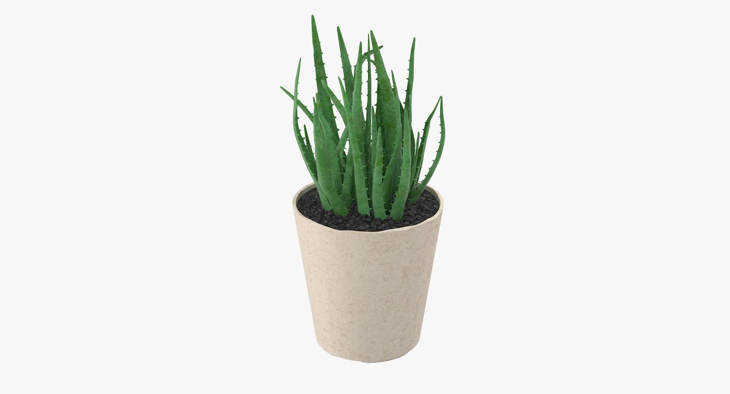 3d model succulent