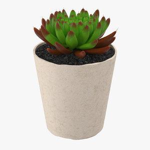 3d succulent 21