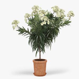 3d model of nerium flower