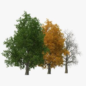 3dsmax yellow poplar old tree