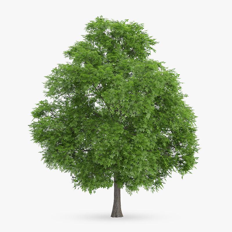 horse chestnut 10 2m 3d max