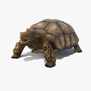 max realistic turtle african spurred