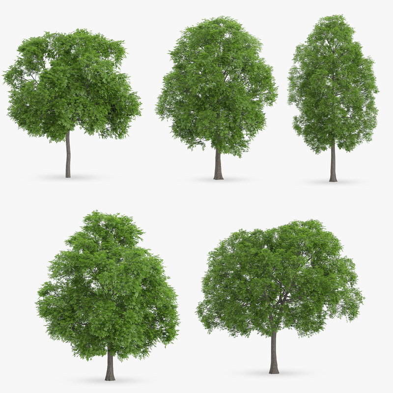 3d horse chestnut trees model