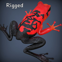 realistic poison rigged dart frog 3d model