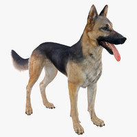 belgian shepherd dog black 3d max