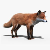 red fox fur 3d model