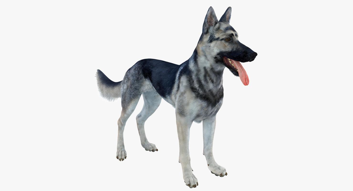 3d model belgian shepherd dog black