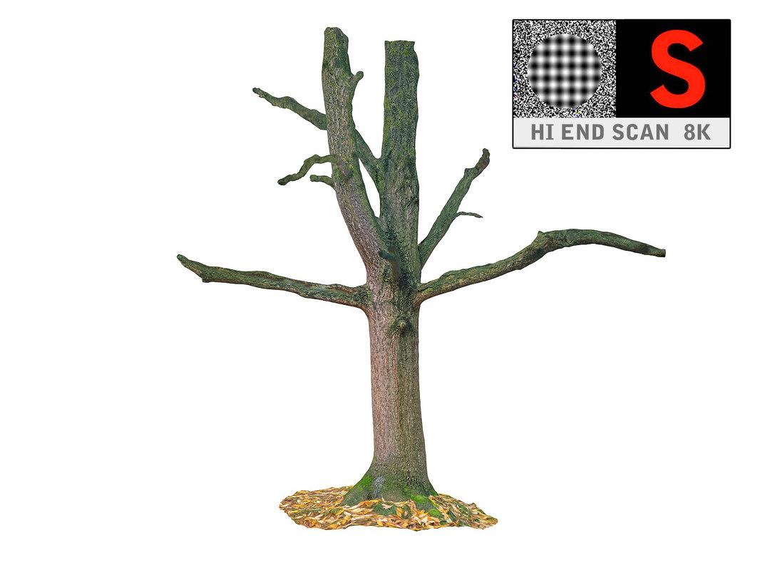 3d scanned model