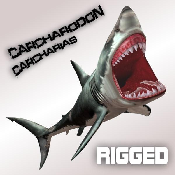 3d model of carcharodon carcharias shark megalodon