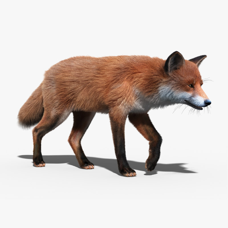 red fox fur rigged max