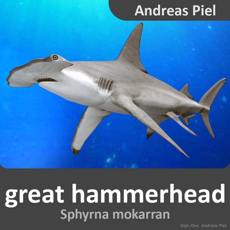 male great hammerhead shark 3d model