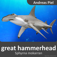 male great hammerhead shark 3d model
