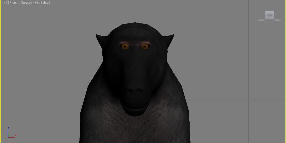 fbx olive baboon