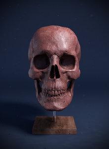 3d obj sculpture human skull