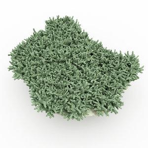 coral max