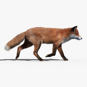 red fox fur hair animation 3d model