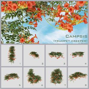 3d campsis trumpet creeper vine