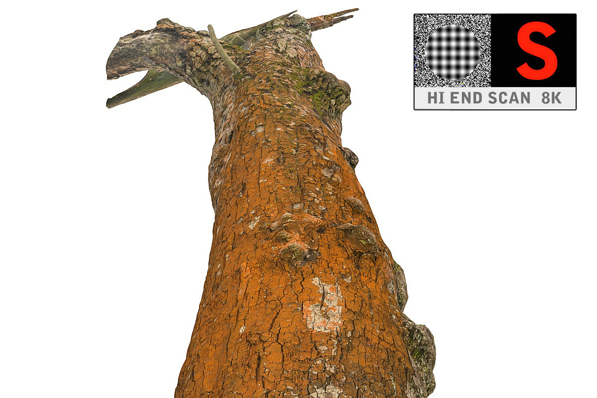 3d crabapple tree 8k bark model