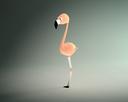 cartoon flamingo 3D models