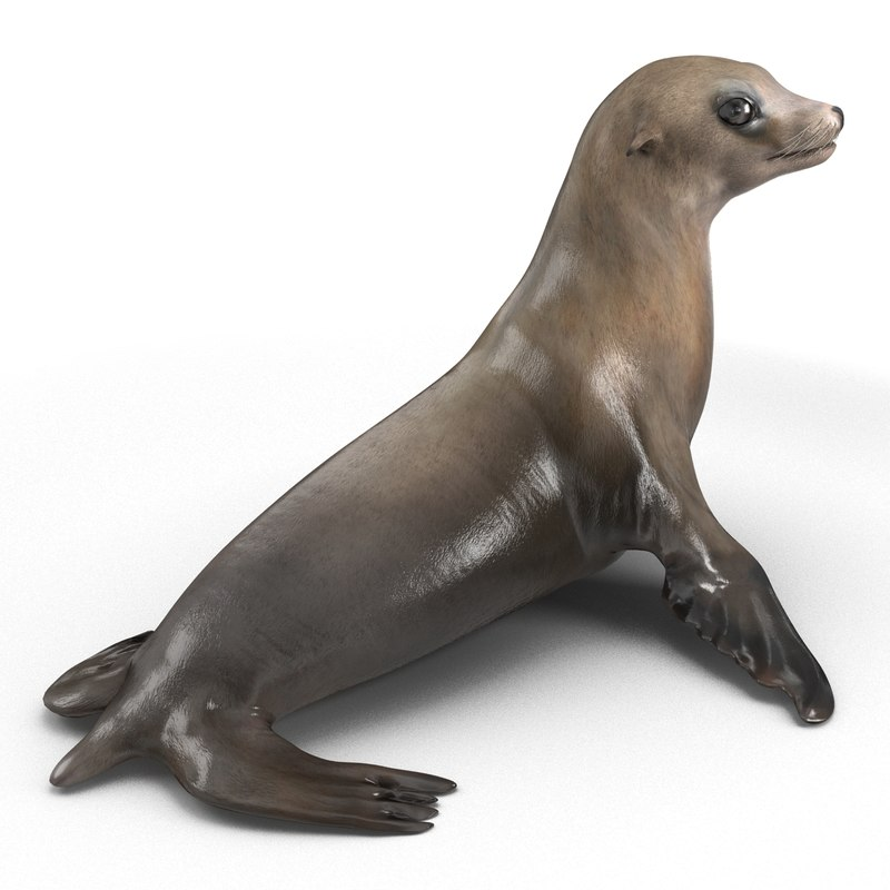 sea lion pose 2 3d 3ds