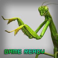 3d model mantis religiosa