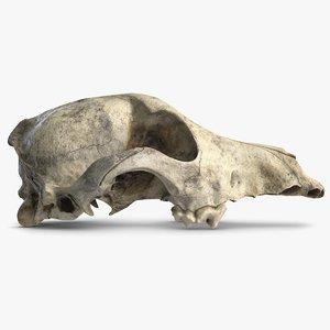 dog skull 5 3d c4d