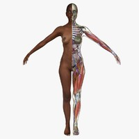 3d ultimate complete female anatomy