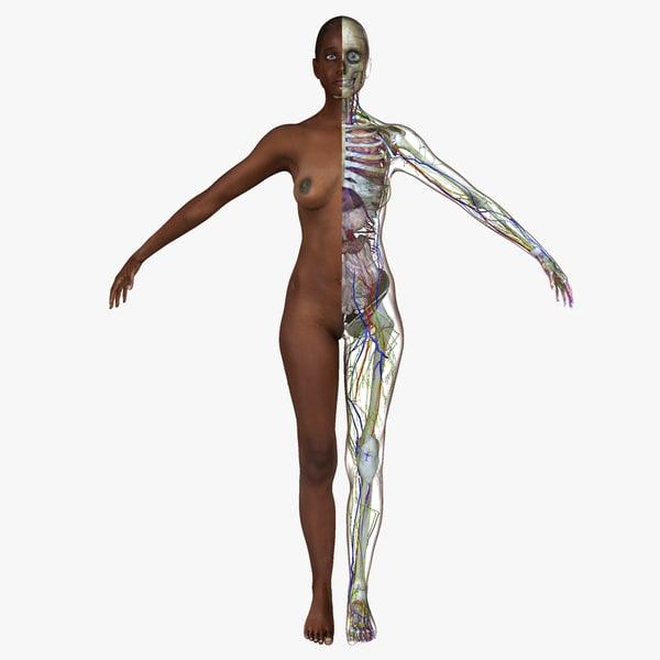 female african american anatomy body ma