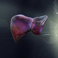 lwo human liver anatomy