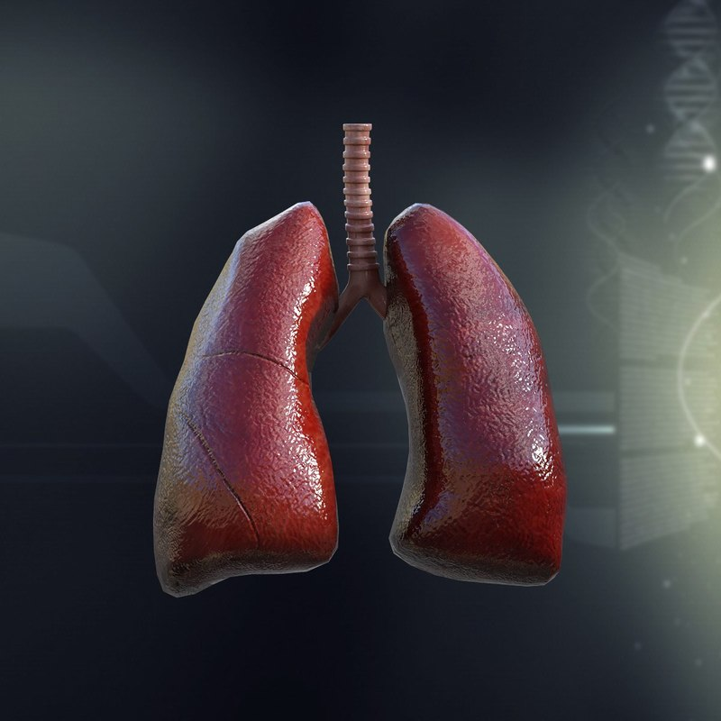 3d 3ds human lungs anatomy