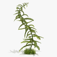 young fern plant 3d 3ds