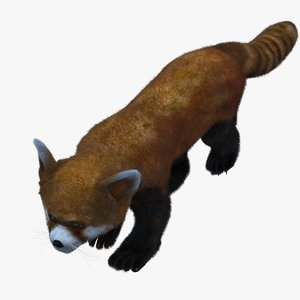 3d rare animals red panda