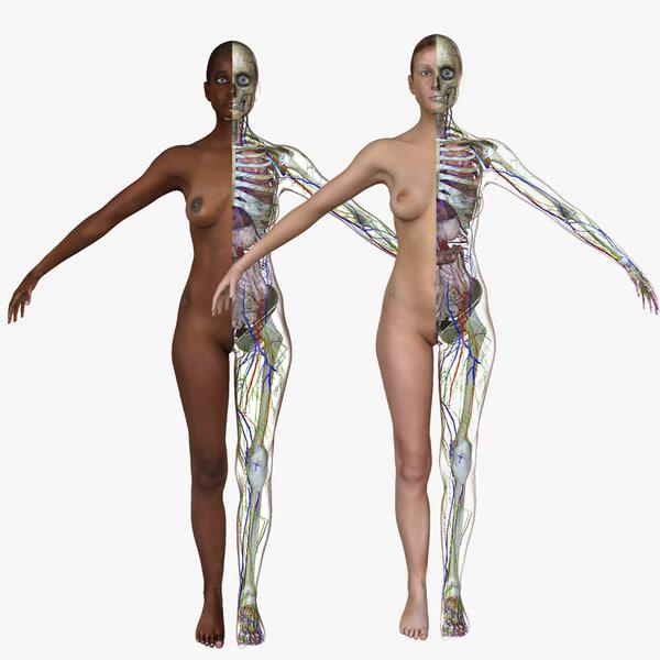 3d model female body anatomy combo