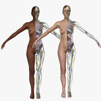 3d model female body anatomy combo