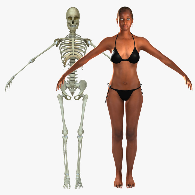 3d model human skeleton female skin