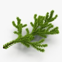 Christmas Fir Branch