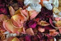 Flora_Texture_0004
