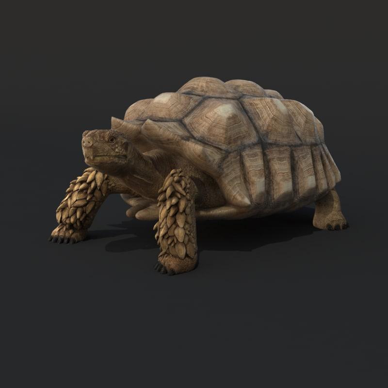 realistic turtle rig tortoise shell max