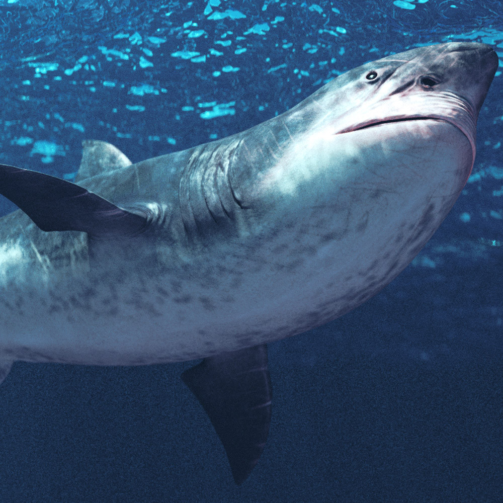 jaw shark 3d model
