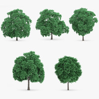 sweet chestnut trees 5 3d max