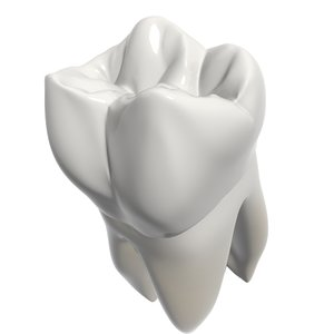 3d second molar