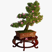 3d model bonsai tree