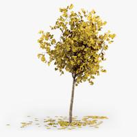 3d model of autumn tree bark